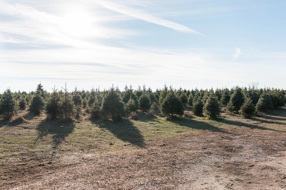 2015-12-22_0001 ... - Brooke & Ben's Christmas Tree Farm Engagement Omaha » Lincoln